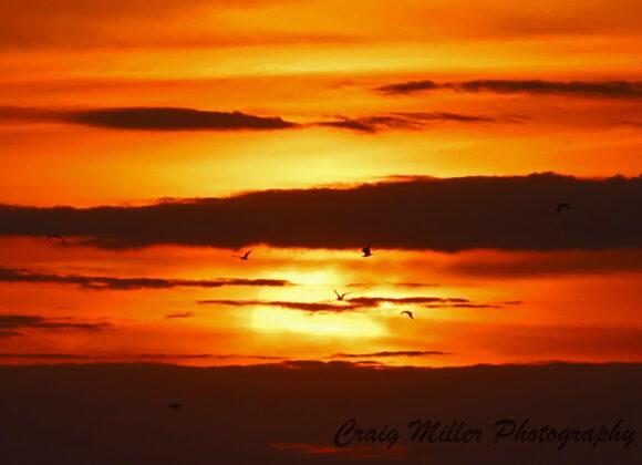 Tranquility Tuesday #19 Sun Birds